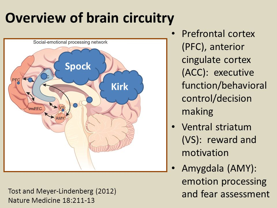 The Adolescent Brain Why Executive >> Adolescent Brain Development Part 2 Ppt Video Online Download