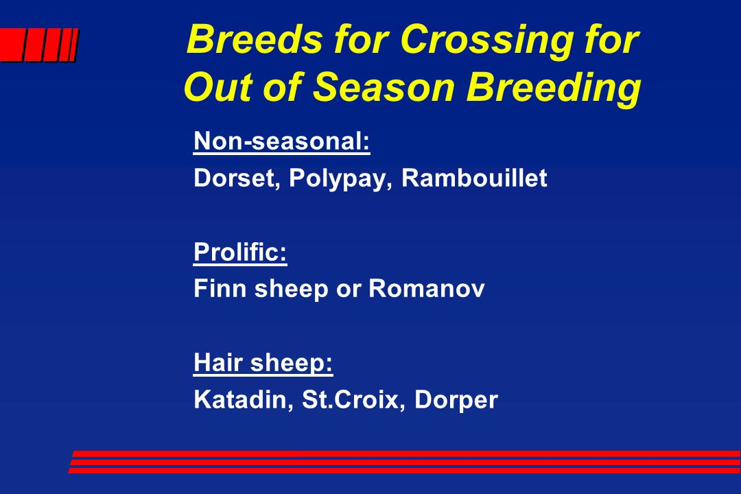 Production by Breeding Season with PP Ewes - ppt video