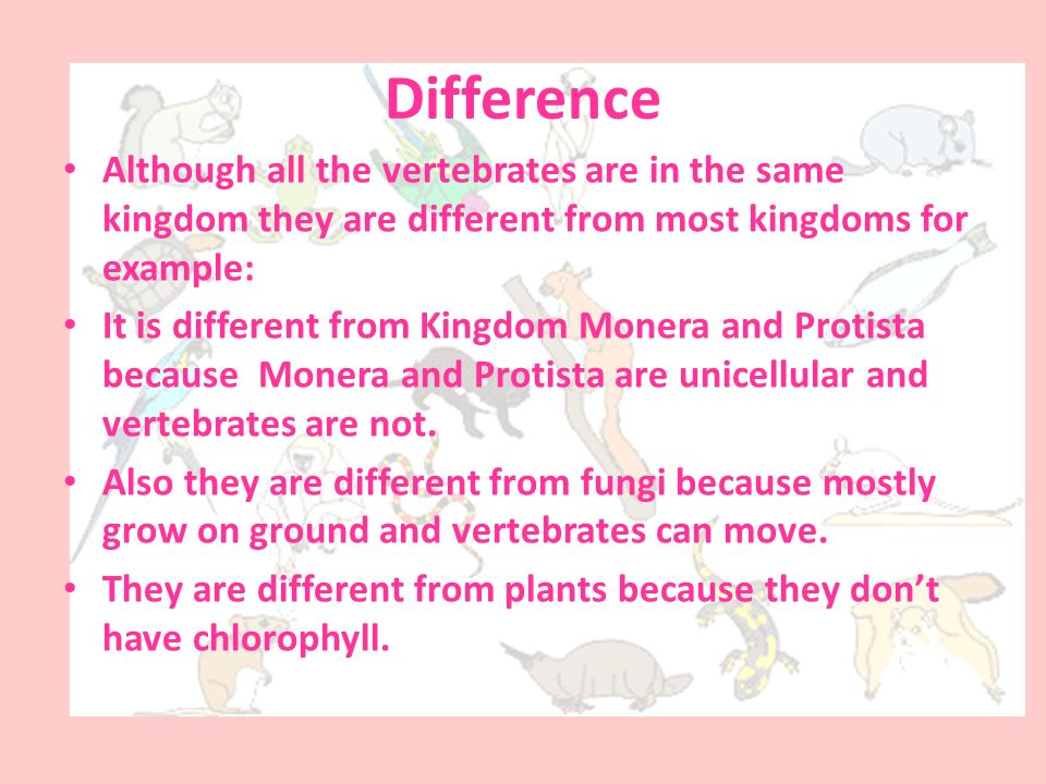 Difference Although all the vertebrates are in the same kingdom they are different from most kingdoms for example:
