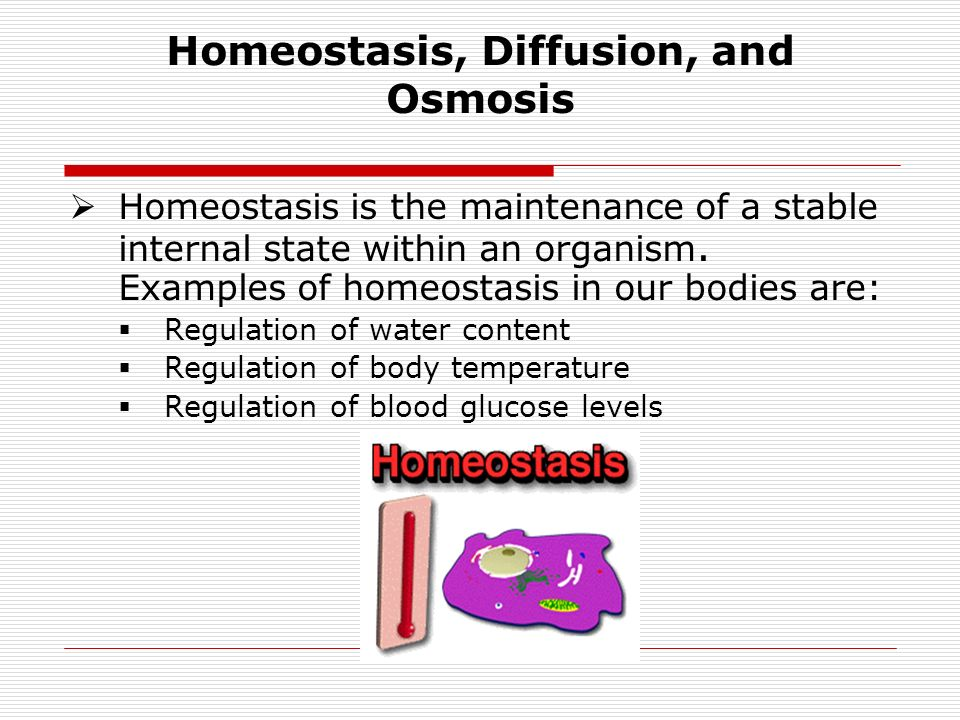 diffusion osmosis and active transport A quiz on diffusion and osmosis for my ninth grade biology class please let me know if you found it helpful, as i'm planning on starting a tzedakah based on th.
