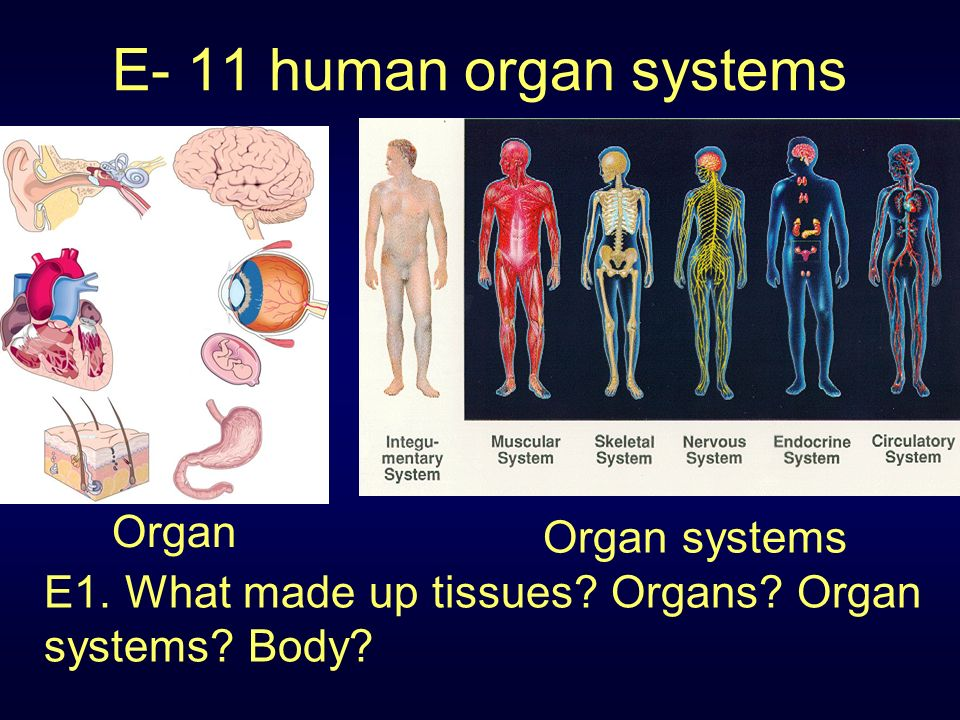 legalizing the sale of human organs final A human harvest: china's organ trafficking exposed in shocking documentary that alleges the illegal trade is now worth a staggering us$1 billion a year.