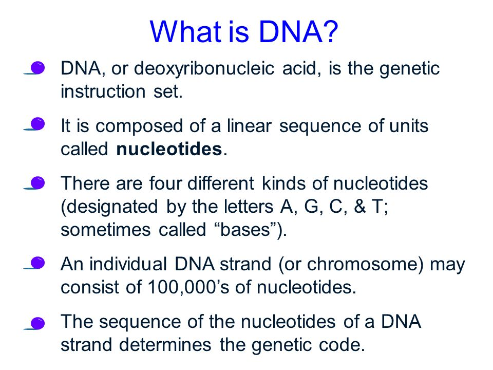 what is the four letter dna alphabet protein synthesis dna ppt 24502