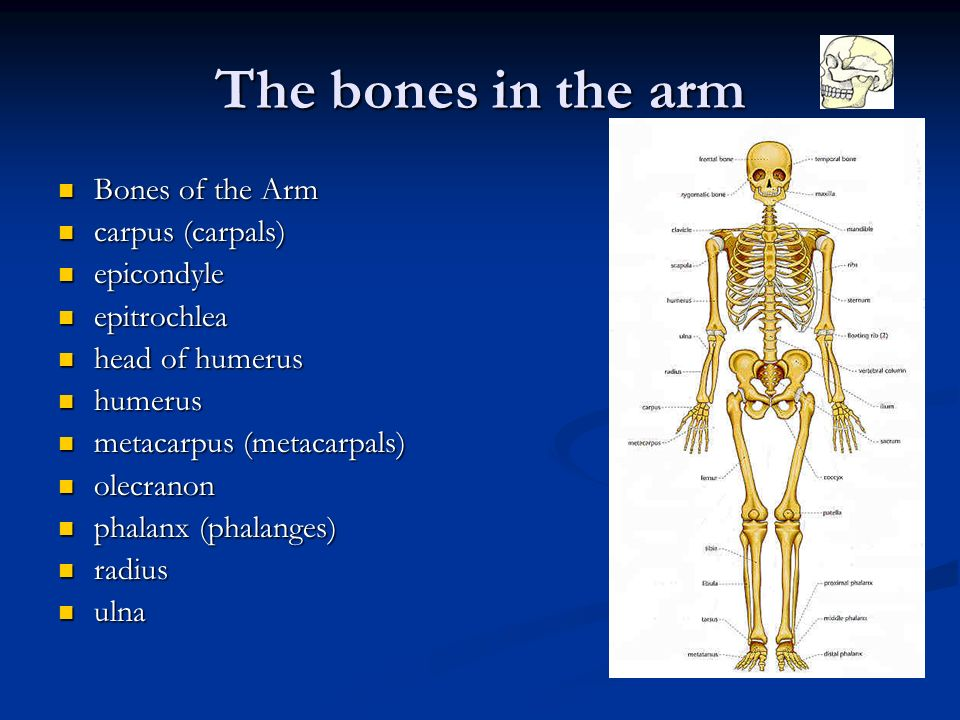 Some interesting facts about the human skeletal system. - ppt download