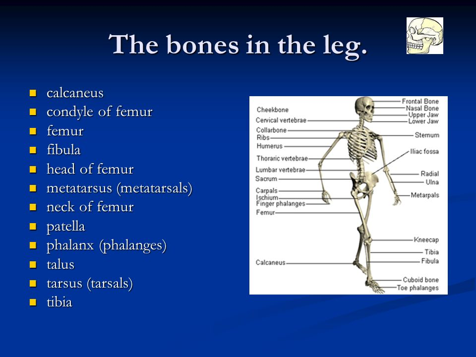 Some Interesting Facts About The Human Skeletal System Ppt Download
