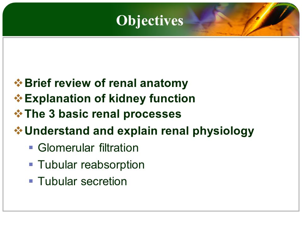 Anatomy and Physiology of the Kidney - ppt video online download