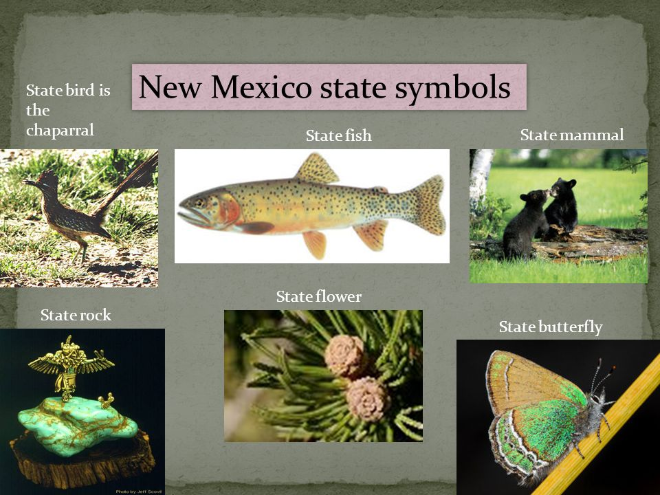 New Mexico By Cam Eskelsen It Grows As It Goes Ppt Video Online