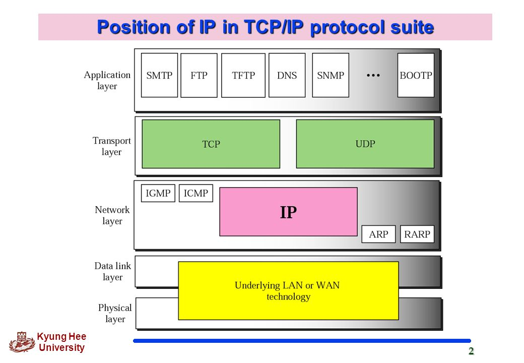 Position of IP in TCP/IP protocol suite
