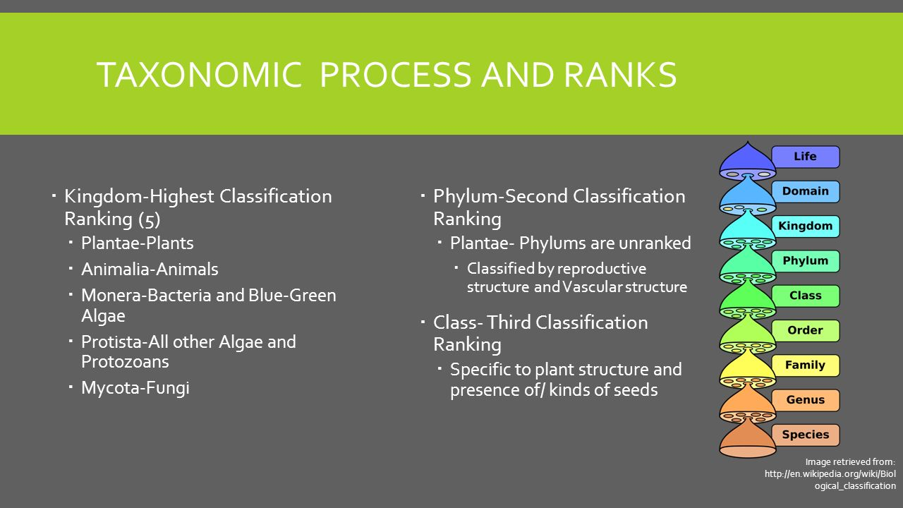 The Structure and Anatomy of Plants - ppt video online download