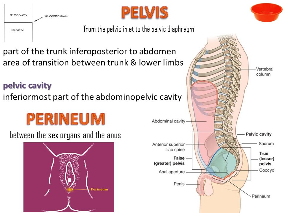 Introduction To Regional Anatomy Ppt Video Online Download