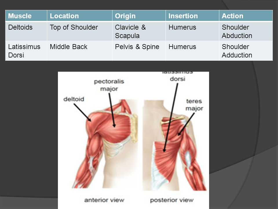 Unit 1 Anatomy Physiology Ppt Video Online Download