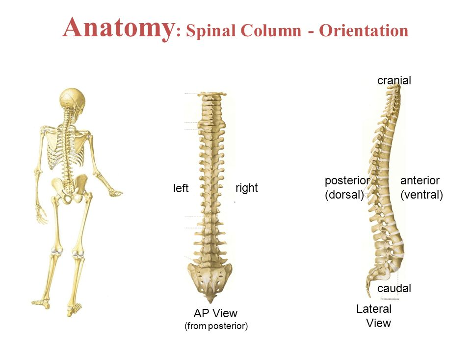 Injuries of the spine. - ppt video online download