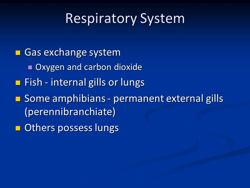 Comparative Anatomy Respiratory System - ppt video online download