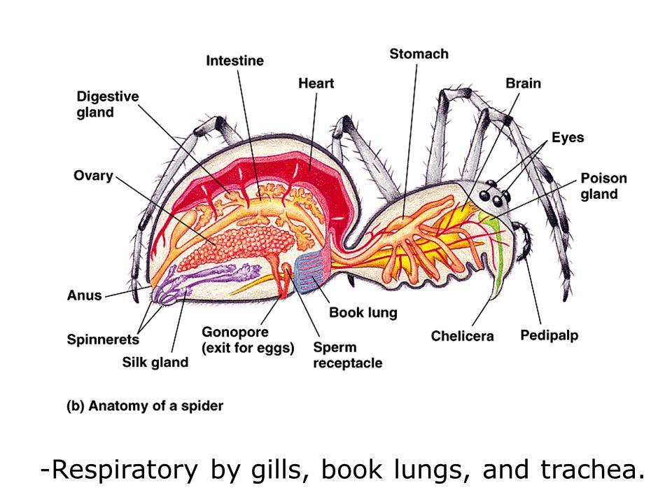 view anthologia