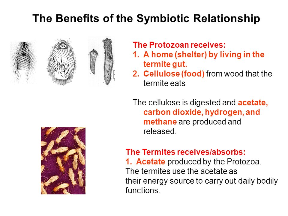 termites and wood relationship