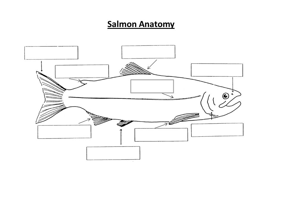 What type of fish is that? - ppt download