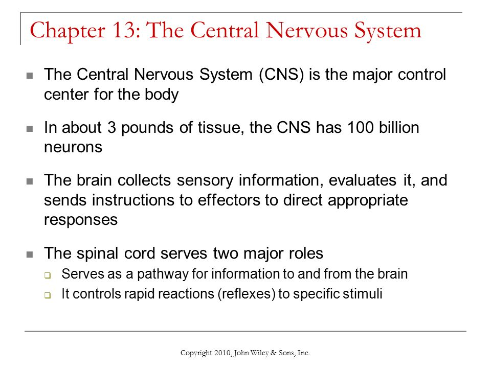 Chapter 13 The Central Nervous System Ppt Video Online