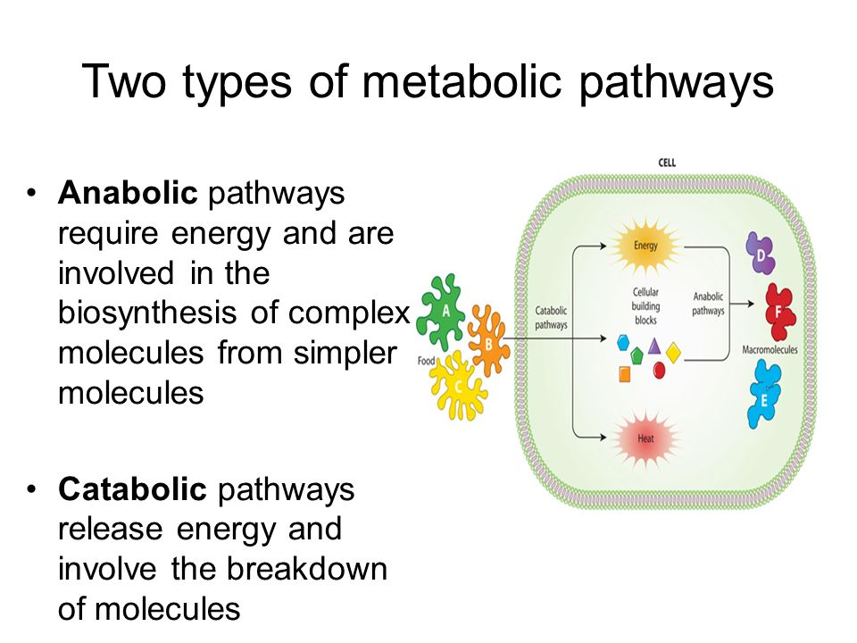 metabolism and enzymes ppt download