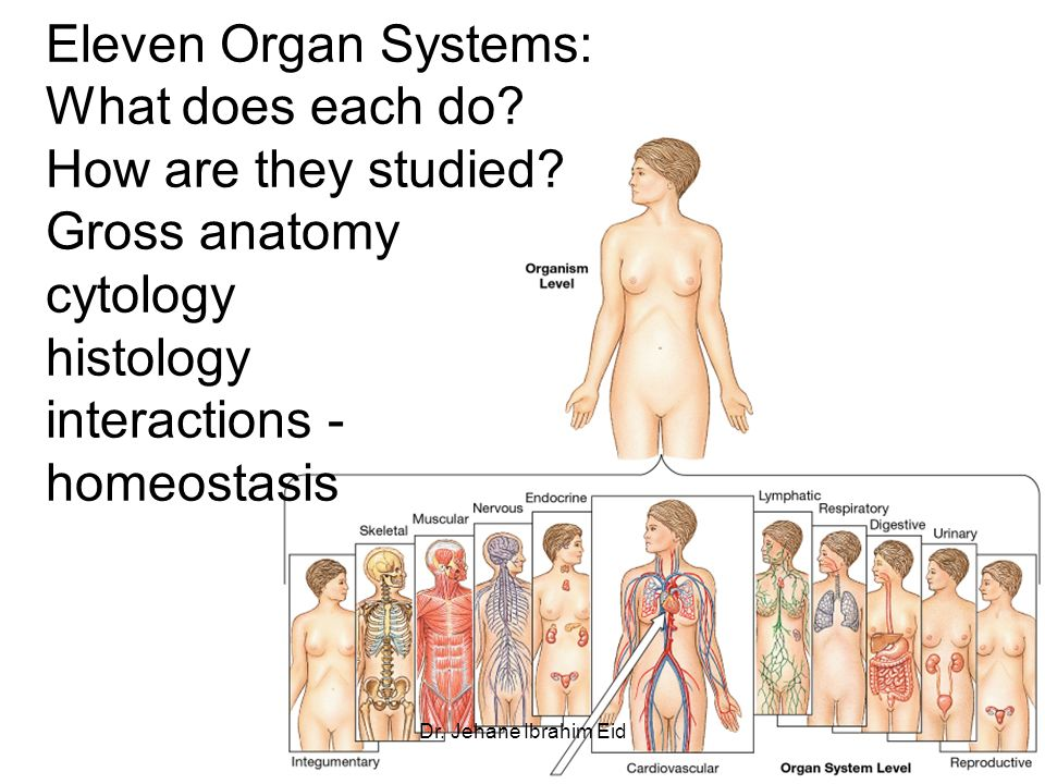 Lecture 1 Introduction To Animal Anatomy Body Regions Organ Systems