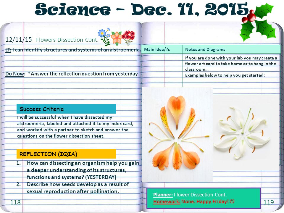 11 11 Flowers Dissection Cont. 6th Grade Science Notebook Ppt