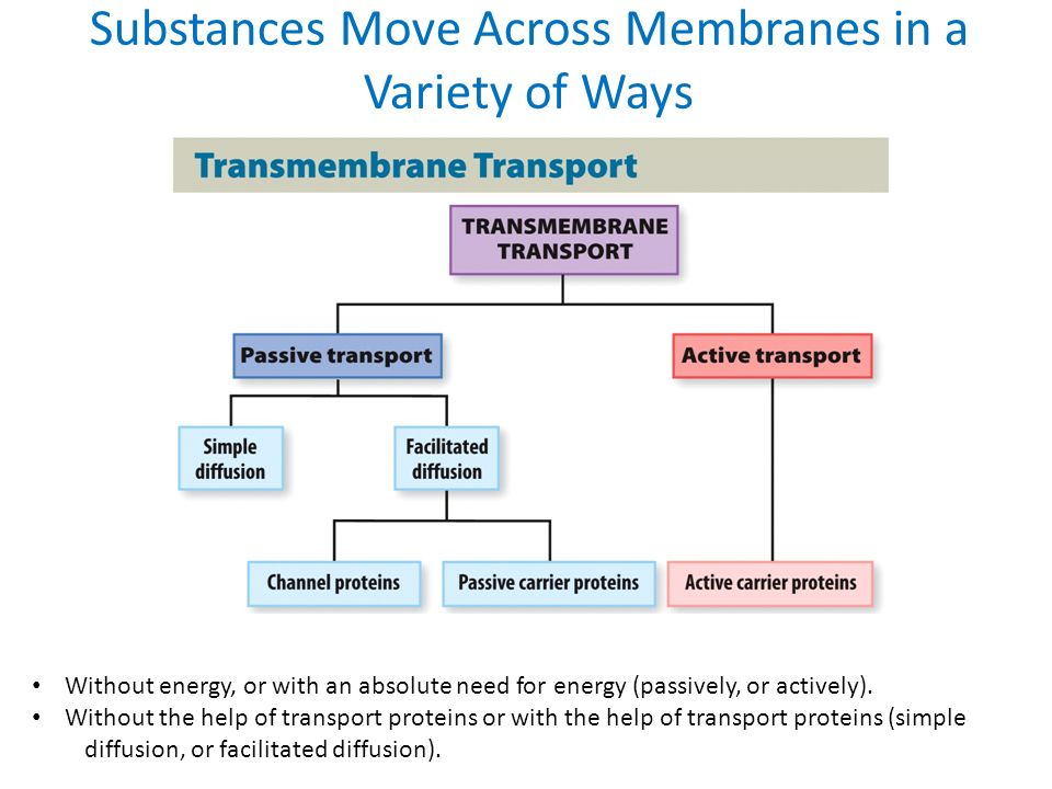 Diagram of cell transport materials diy wiring diagrams discover biology sixth edition ppt download rh slideplayer com active transport diagram cell transport concept map answers ccuart Image collections