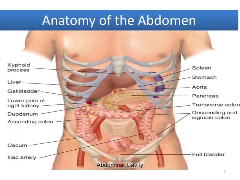 Gastrointestinal Tract - ppt download