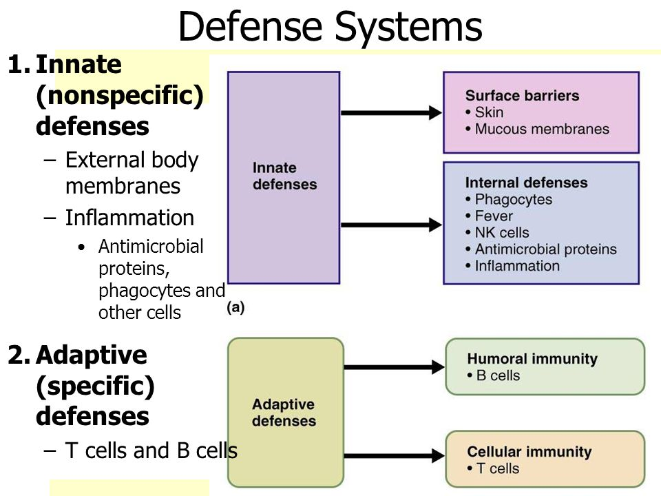 Chapter 21 Nonspecific Body Defenses and Immunity - ppt ...