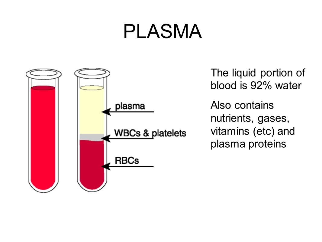 How is the liquid part of the blood called
