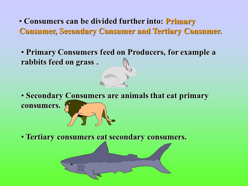 Food Chains and Food Webs - ppt video online download