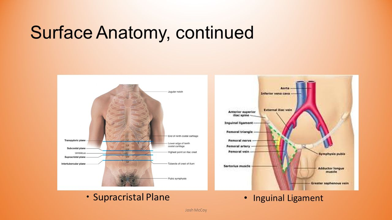 The Hip (Iliofemoral) Joint - ppt video online download