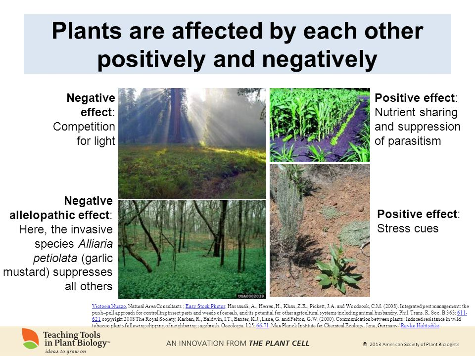 Plant-plant interactions - ppt download