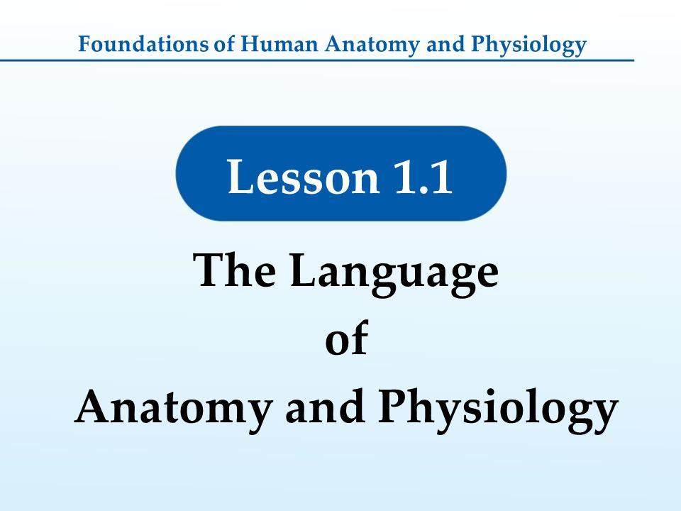 1 Foundations of Human Anatomy and Physiology - ppt download