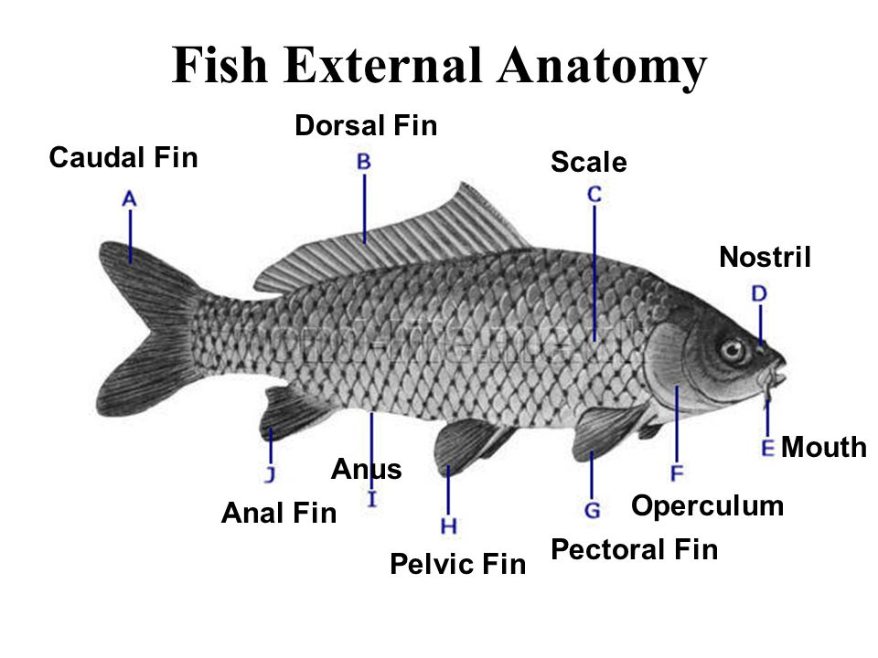 Wake-up Explain the difference between a vertebrate and invertebrate ...