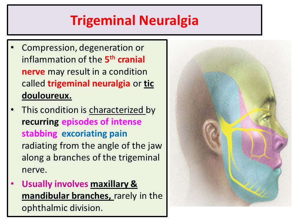 Applied Anatomy Of Trigeminal Nerve Image Collections Human Body