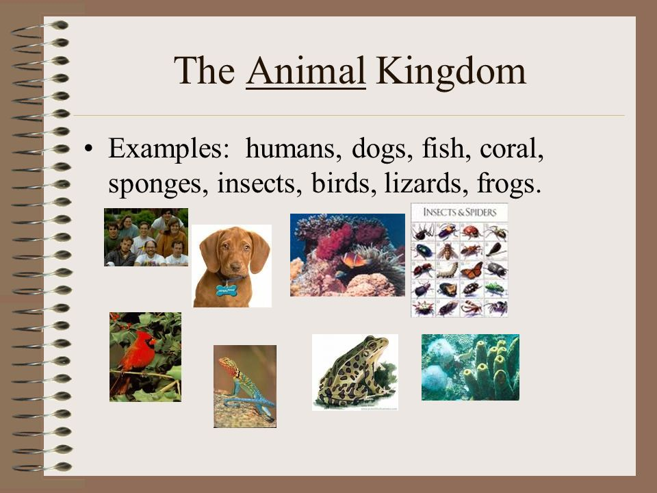 9 The Animal Kingdom Examples Humans Dogs Fish Coral Sponges Insects Birds Lizards Frogs