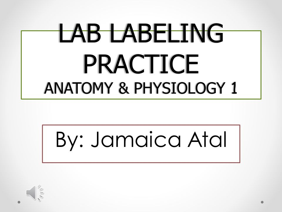 Lab Labeling Practice Anatomy Physiology 1 Ppt Download