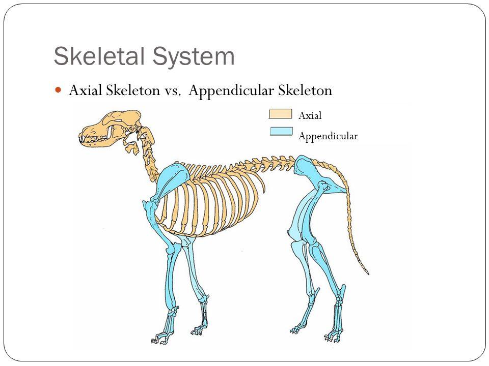 Animal Skeletal System Diagram Illustration Of Wiring Diagram