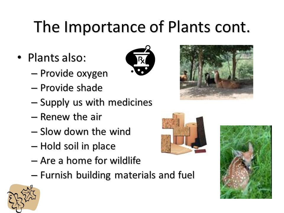 the importance of determining a plant location The location of thermal power plants (like bokaro thermal plant) and steel plants near coal fields are for cutting down cost of the fuel transportation the reliability of continuous supply of these facilities is an important factor.