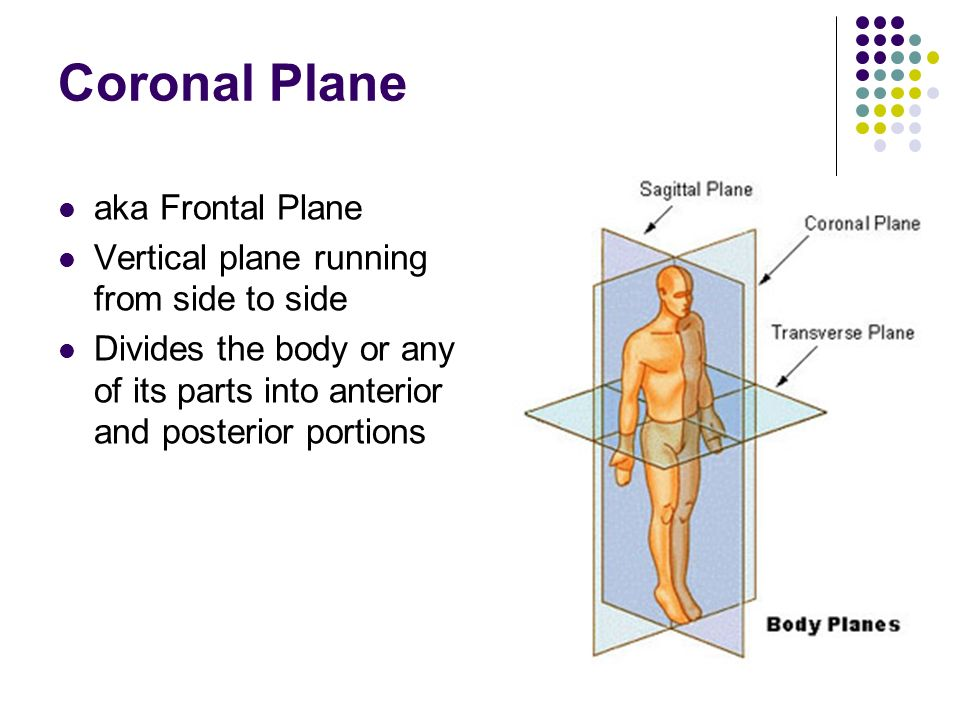 Anatomical Terminology - ppt video online download
