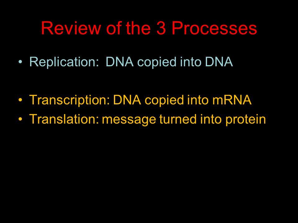 DNA Processes: Replication, Transcription, & Translation - ppt video ...