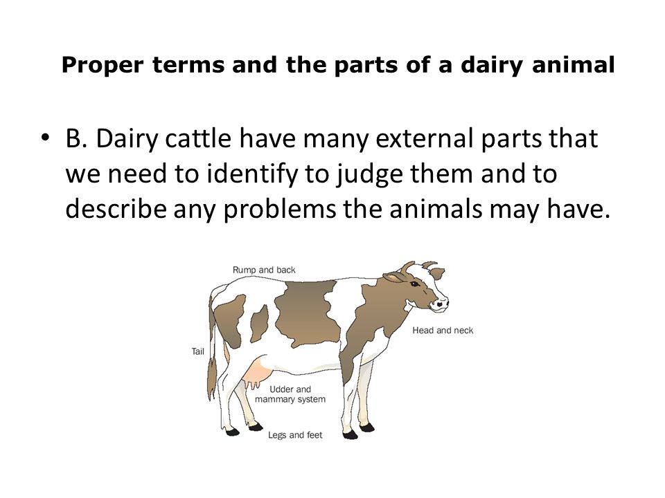 The Dairy Industry Part ppt download