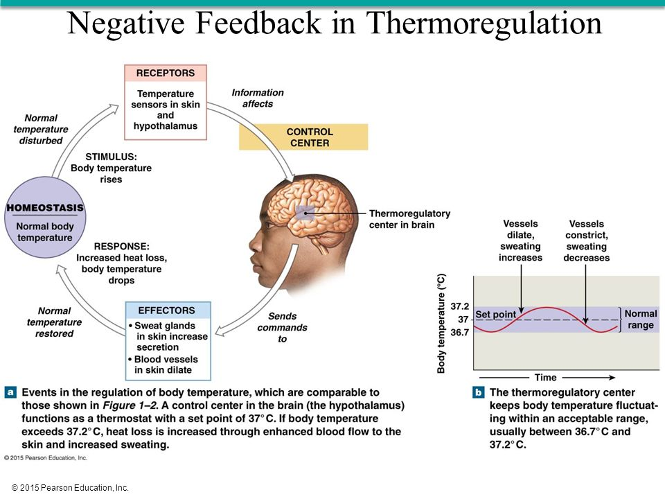 Normal Body Temperature Negative Feedback Diagram - Automotive ...