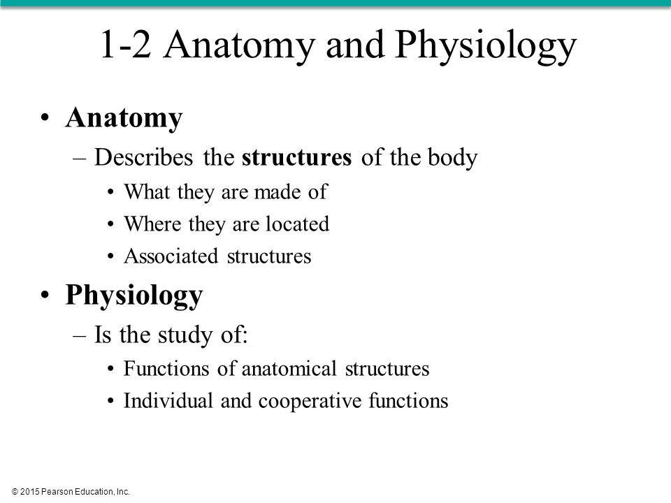 What Is The Study Of Anatomy Images - human body anatomy