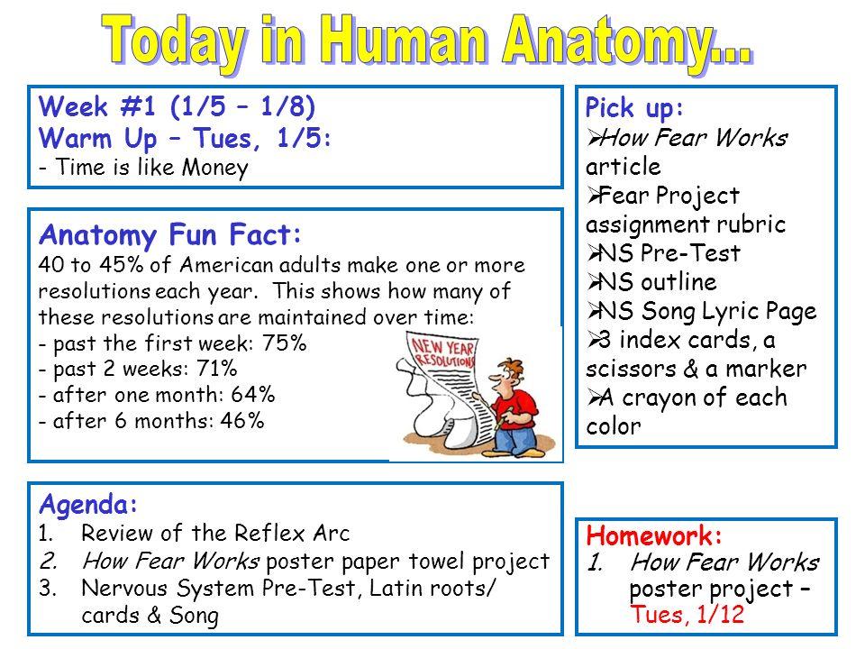 Today in Human Anatomy... Anatomy Fun Fact: Week #1 (1/5 – 1/8 ...