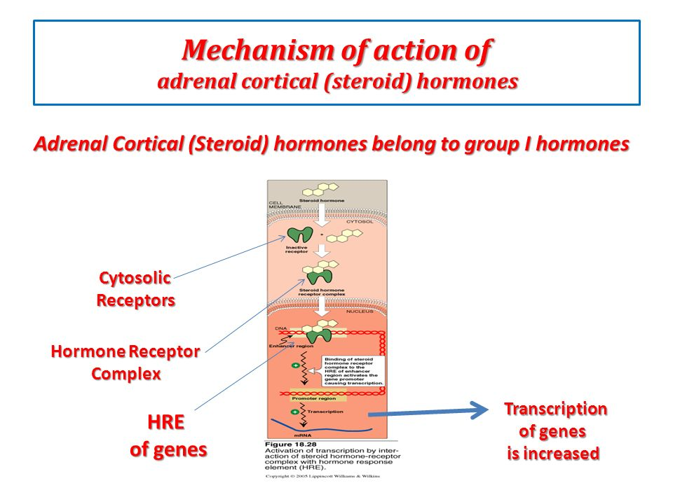 Adrenal Cortical Hormones Ppt Download
