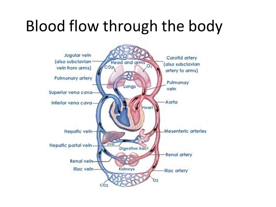 14human Systems Circulatory System Ppt Video Online Download