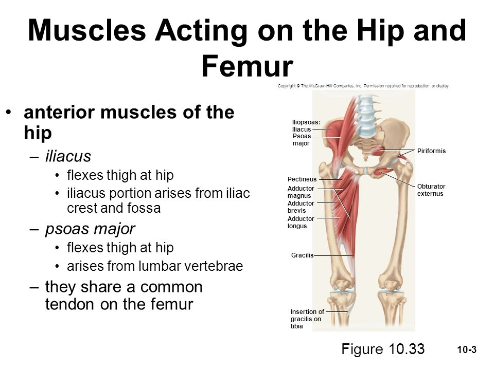 Muscles Acting On The Hip And Lower Limb Ppt Video Online Download