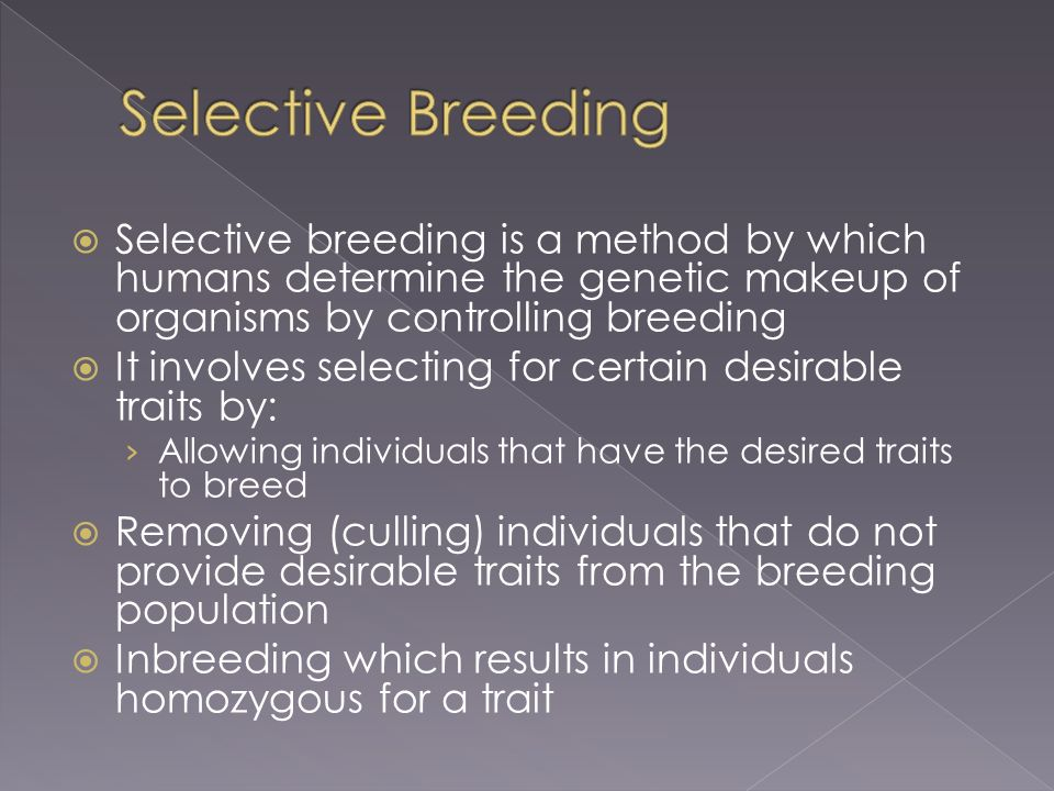how humans manipulate genetic transfer in selective breeding