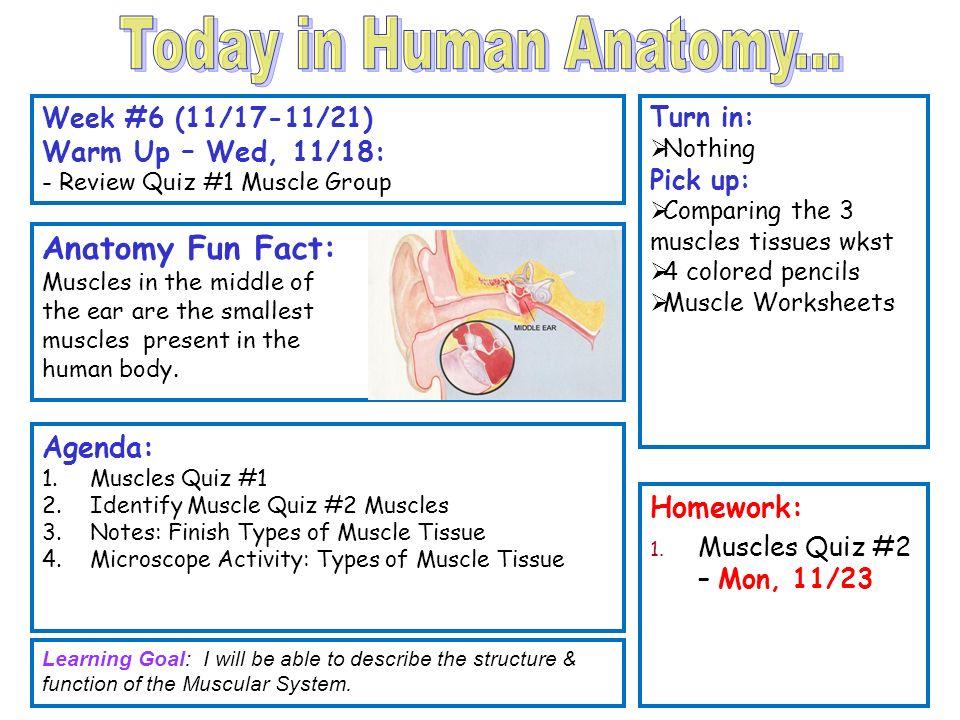 Skeletal Muscle Functions - ppt video online download