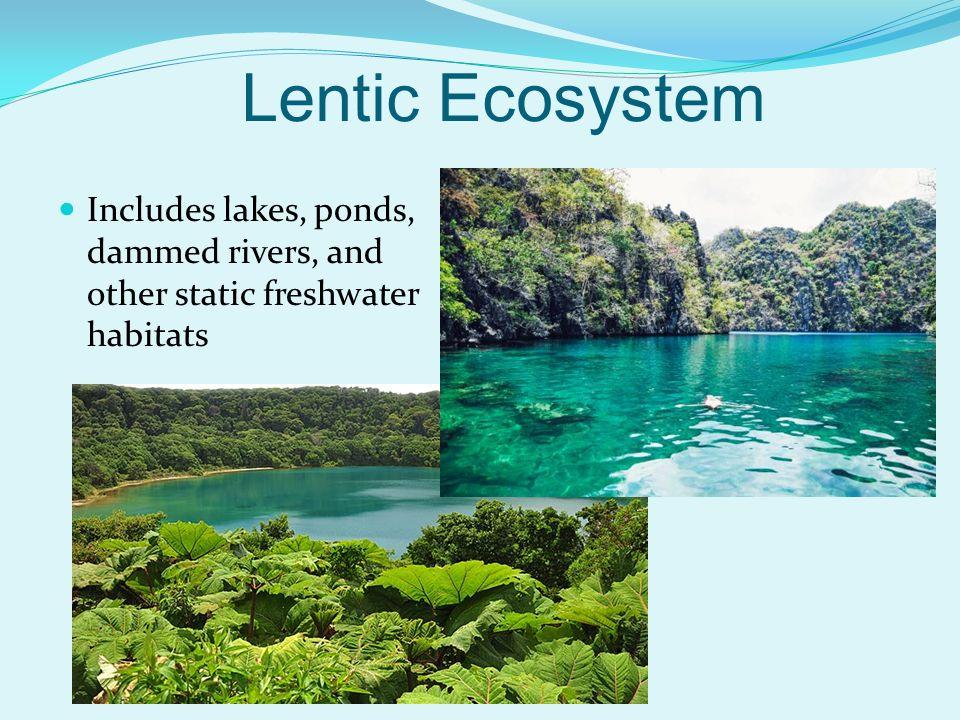 lentic ecosystem