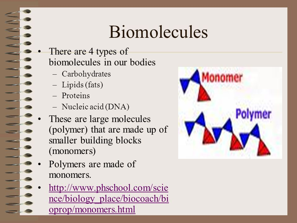 what are the four biomolecules